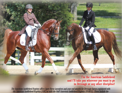 USDF's Spotlight on the American Saddlebred Registry