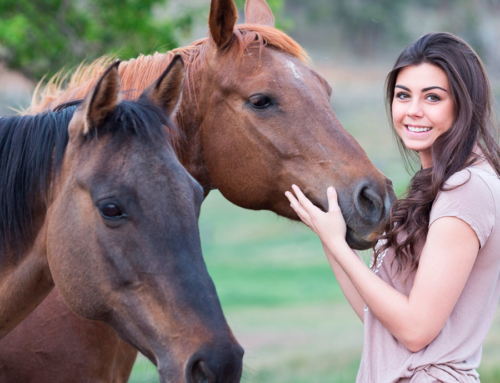 MASHC Equine Forum: An All-Breed Gathering with Q & A